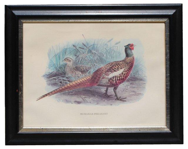 Murghab Pheasant Print